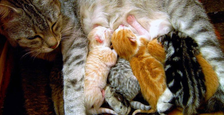 Mother Cat Caring for Kittens