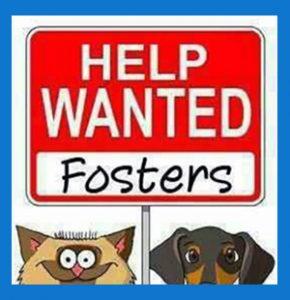 Foster Program – Bannock Humane Society